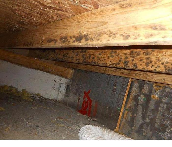 Mold Remediation With excessive crawl space moisture, mold will grow at a rapid pace. Crawl space mold can be damaging to your home's structure, your flooring, and any